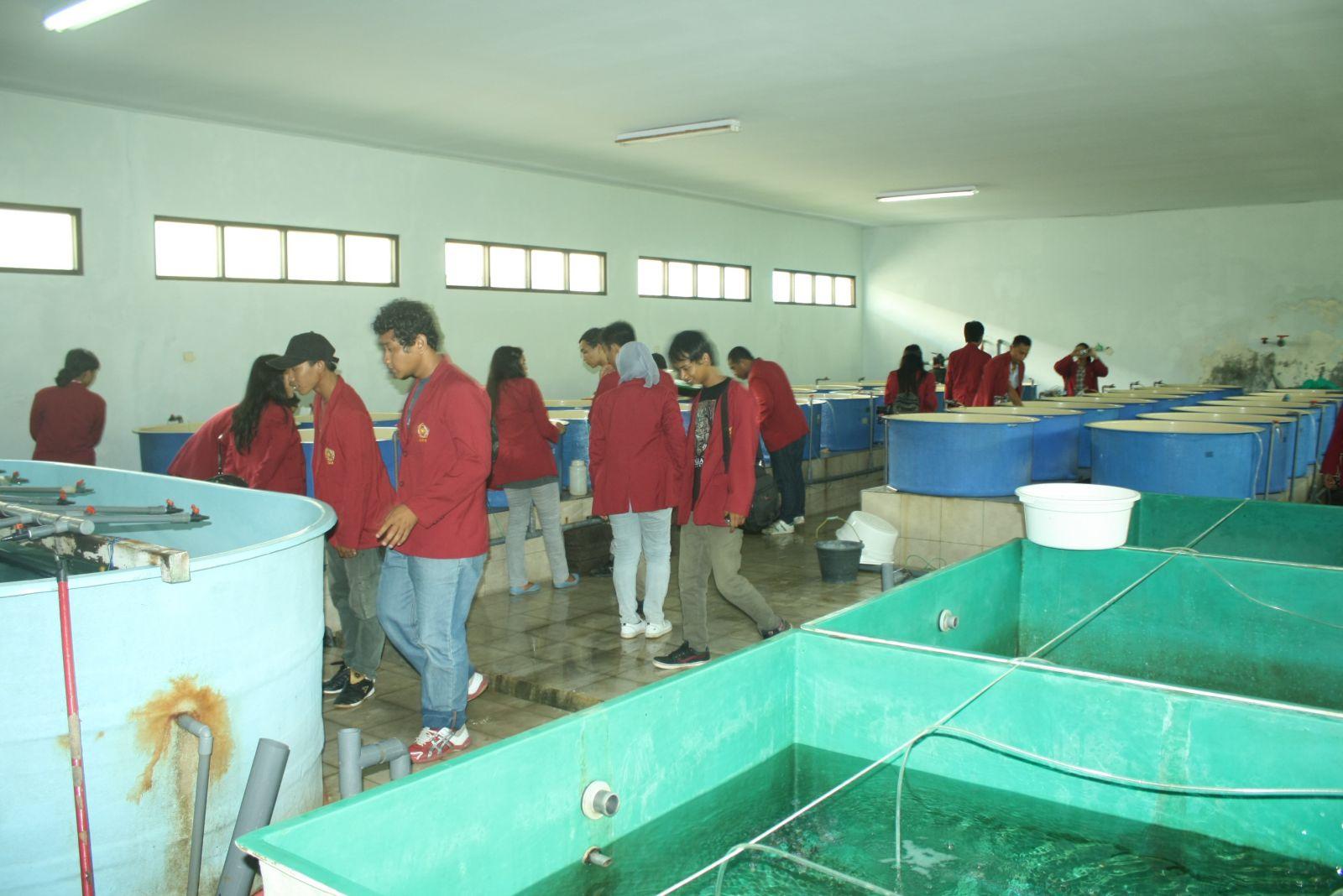 Jurusan Budidaya Perairan - 4.bp.blogspot.com